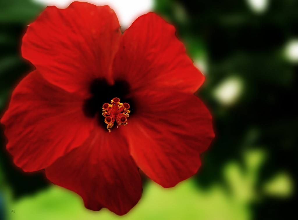 Amazing Hibiscus Pictures & Backgrounds