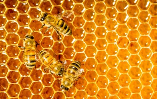 Amazing Honey Pictures & Backgrounds