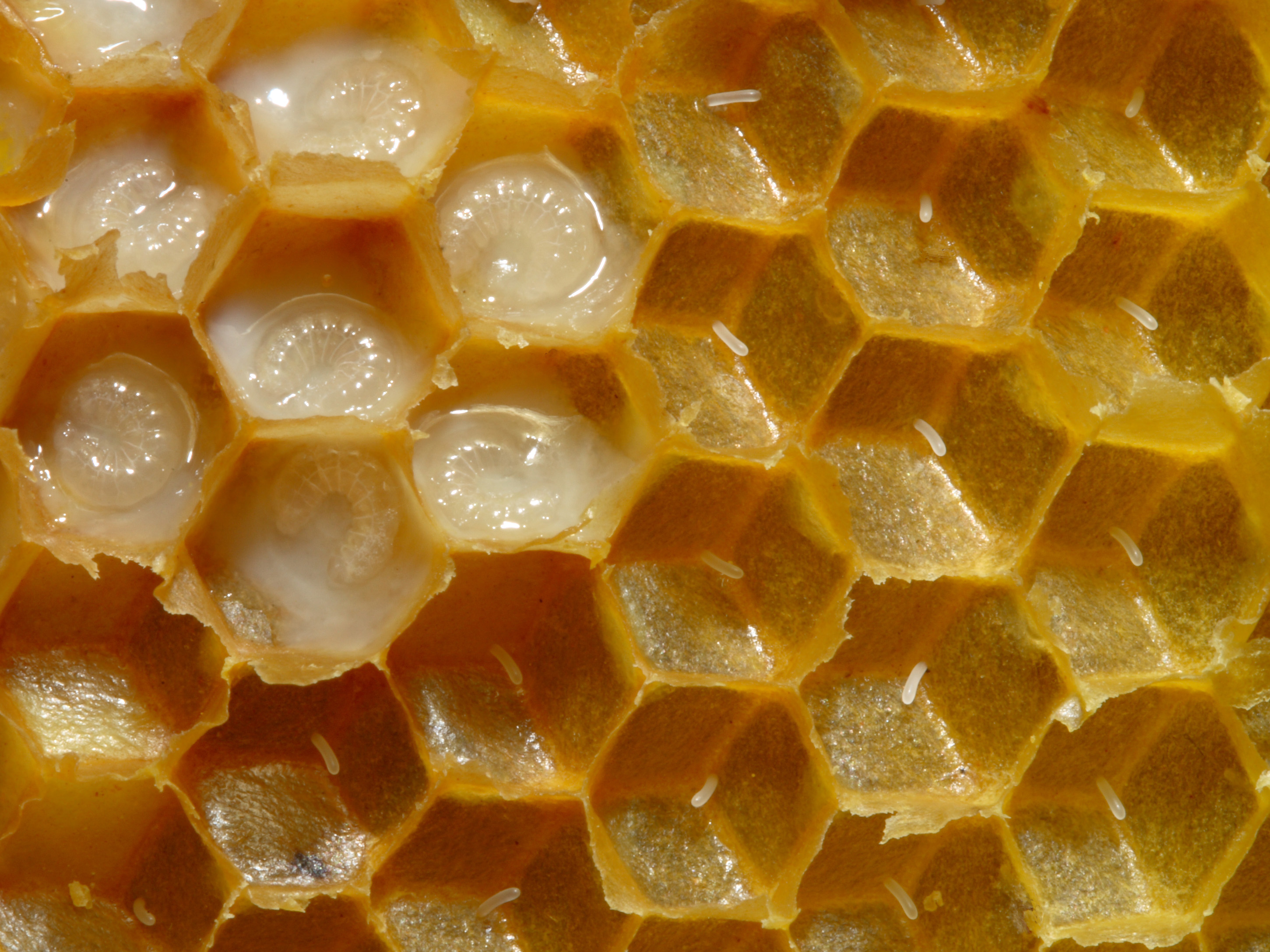 Images of Honeycomb | 2901x2176