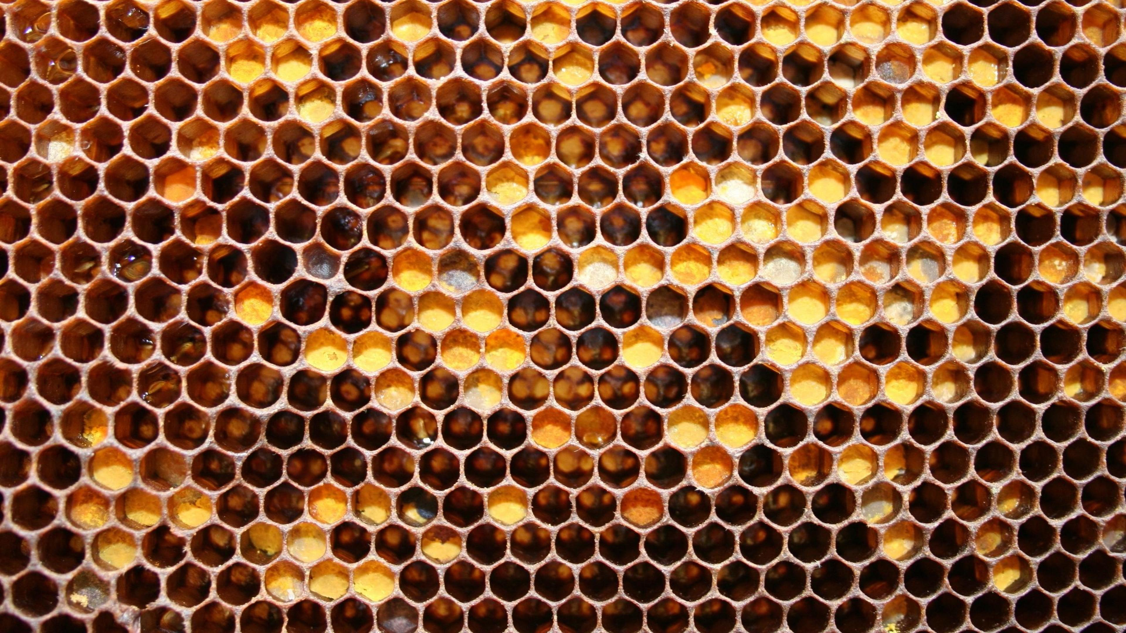 Honeycomb Pics, Abstract Collection