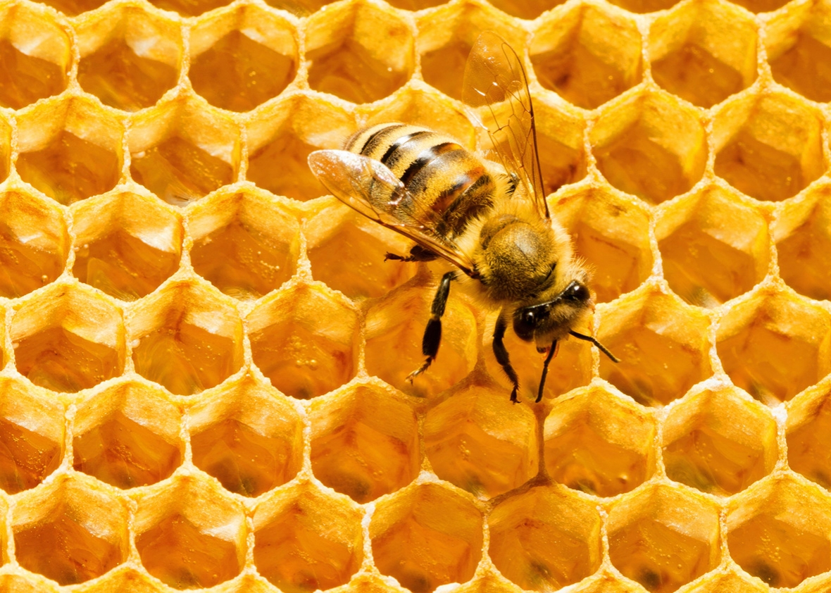 Amazing Honeycomb Pictures & Backgrounds