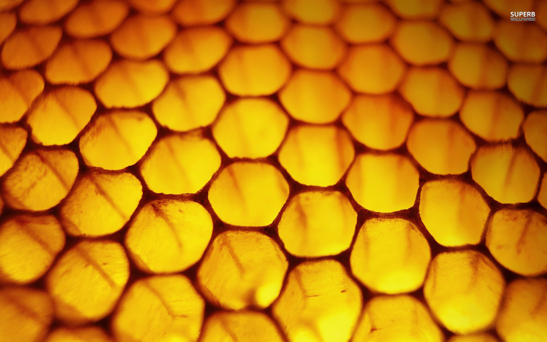 HD Quality Wallpaper | Collection: Abstract, 1920x1200 Honeycomb