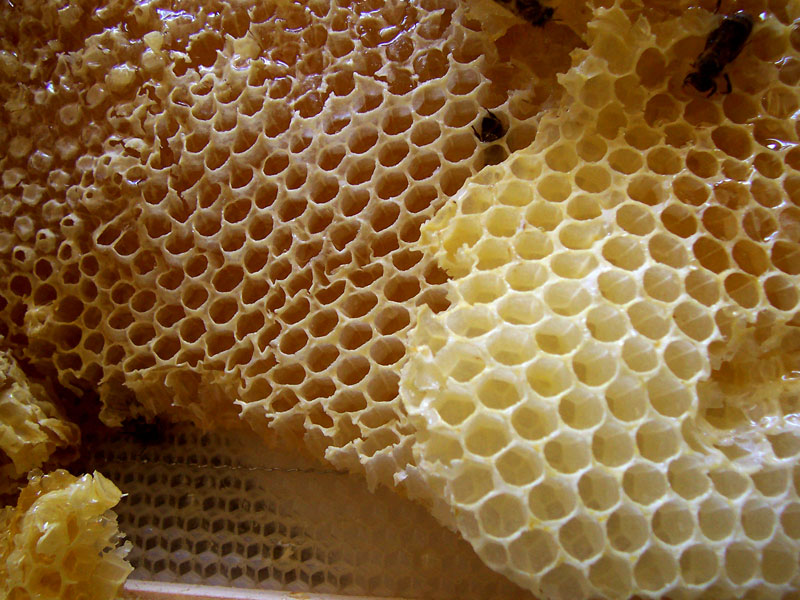 Honeycomb Backgrounds on Wallpapers Vista