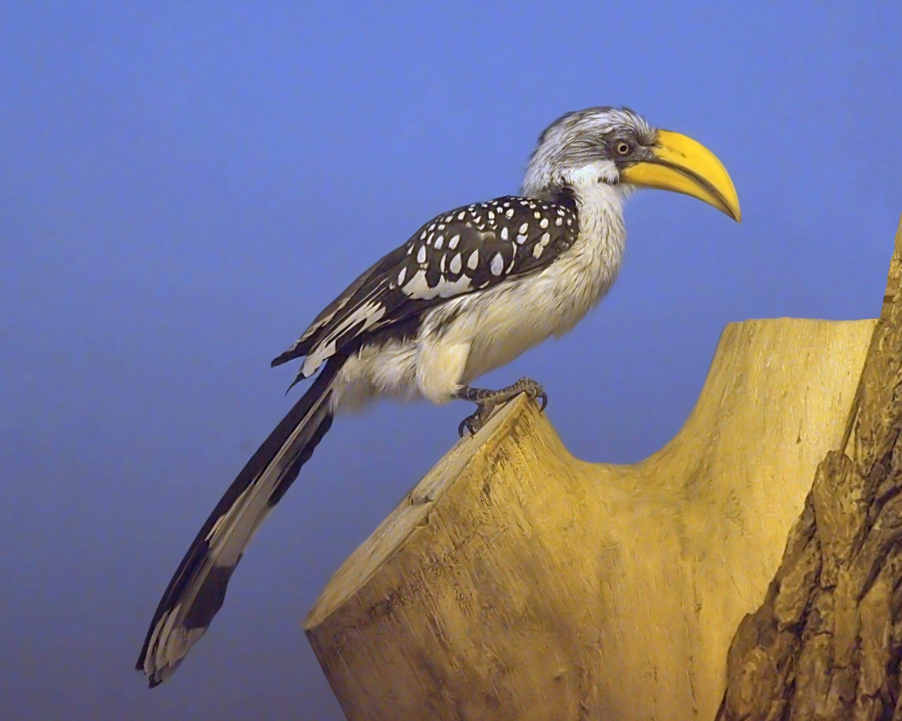 Hornbill Pics, Animal Collection