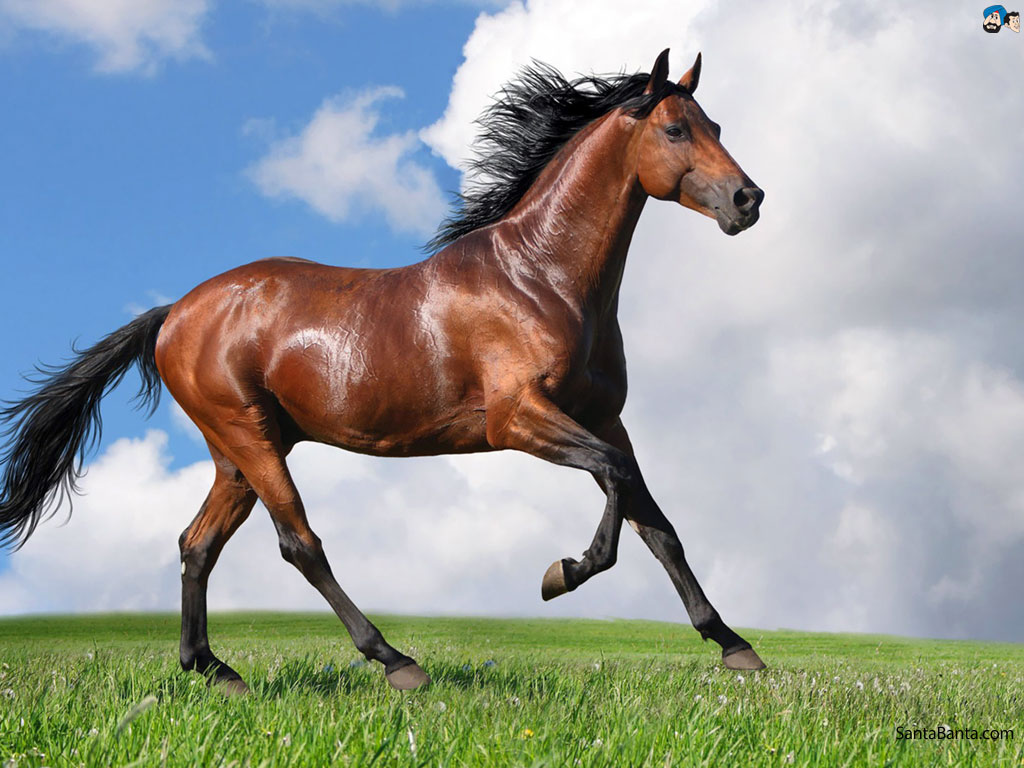 Nice wallpapers Horse 1024x768px