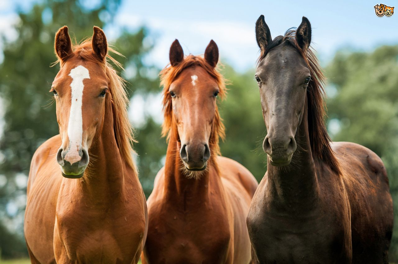 Nice Images Collection: Horse Desktop Wallpapers