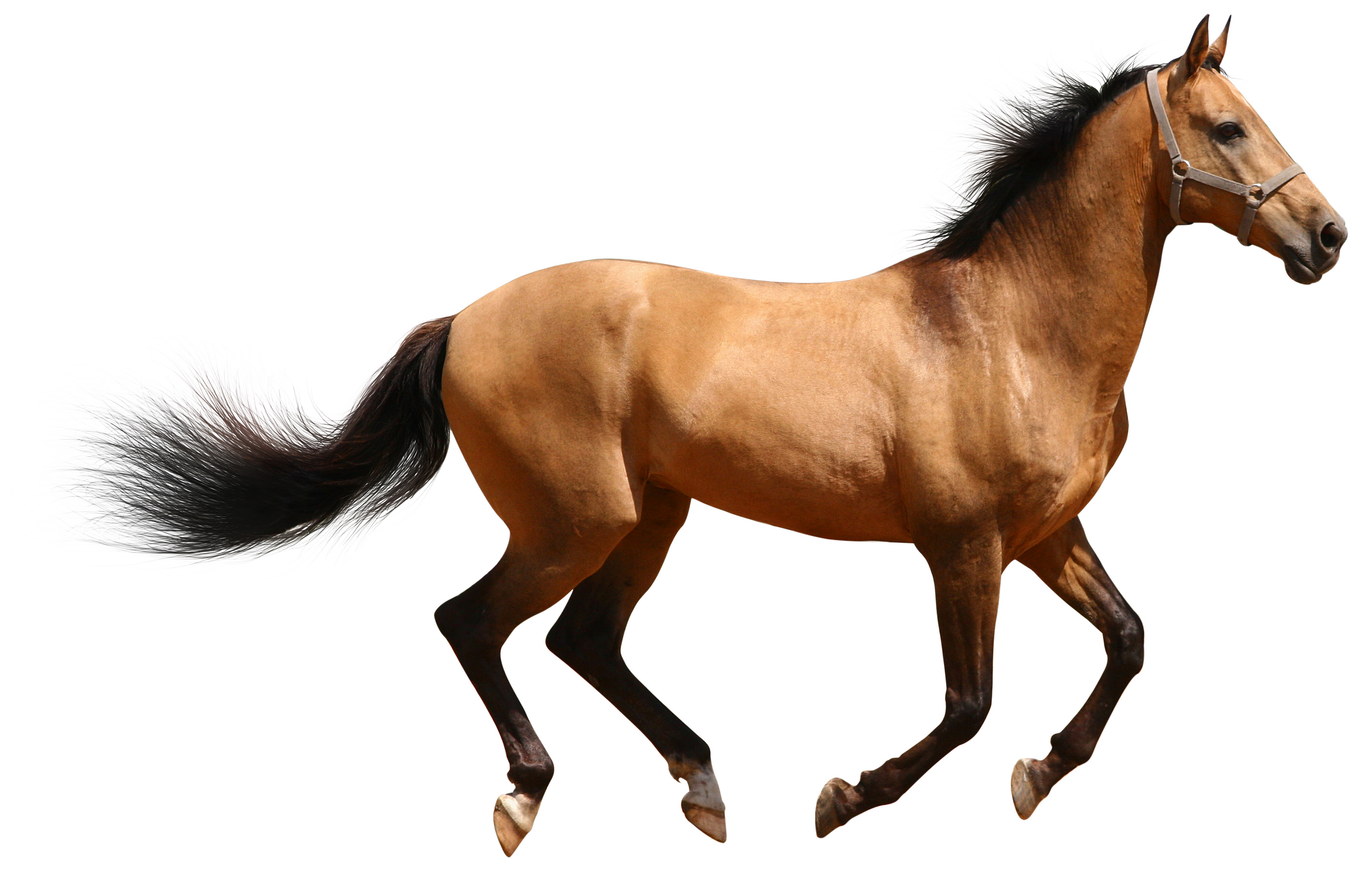 HD Quality Wallpaper | Collection: Animal, 3500x2246 Horse