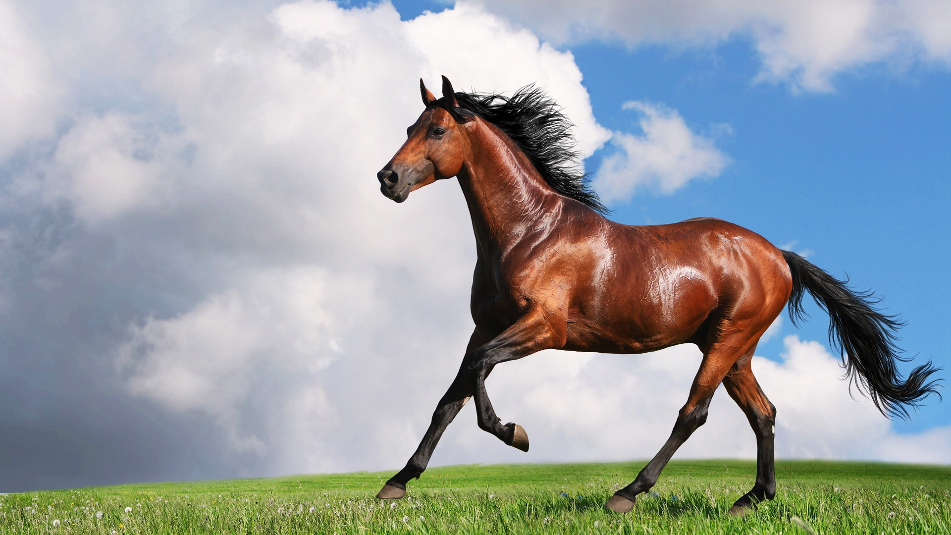 Horse Backgrounds on Wallpapers Vista
