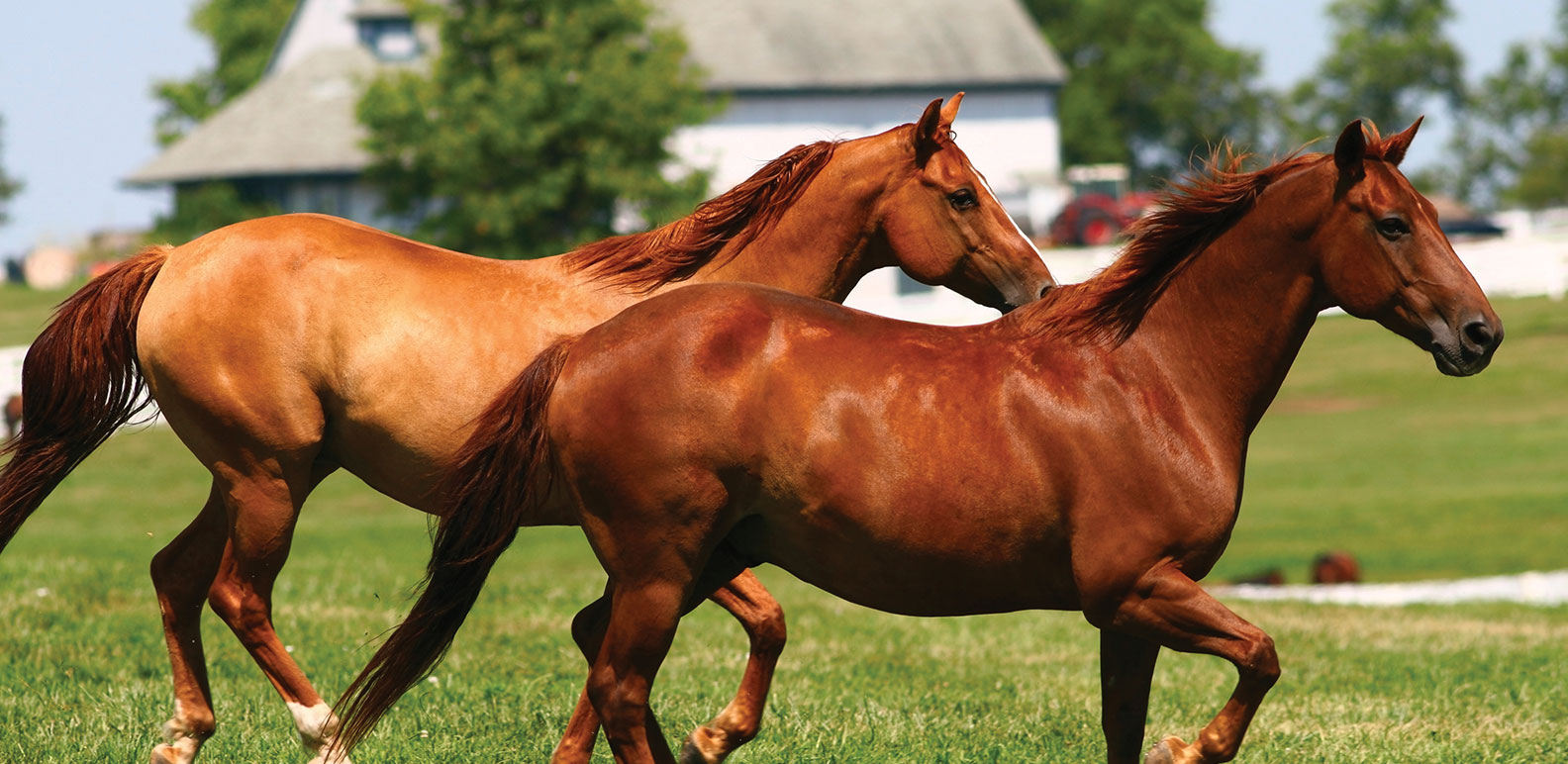Horse High Quality Background on Wallpapers Vista