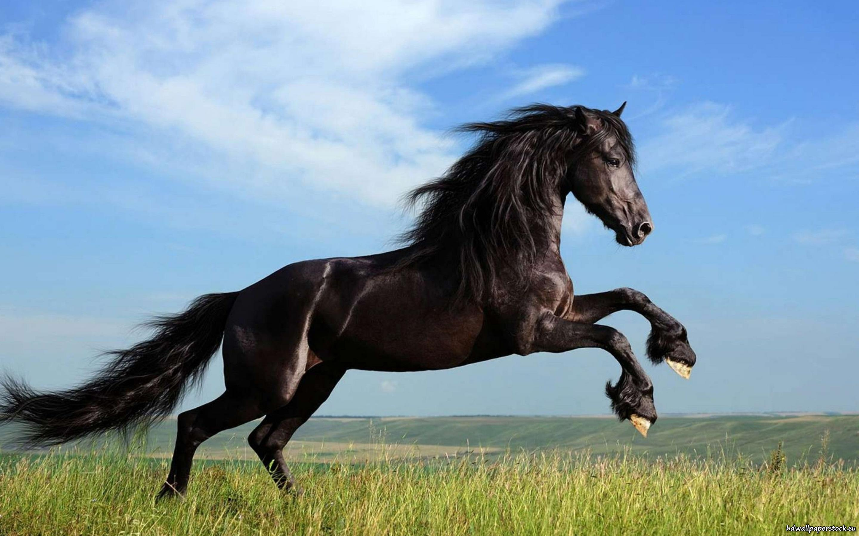 Nice wallpapers Horse 2880x1800px