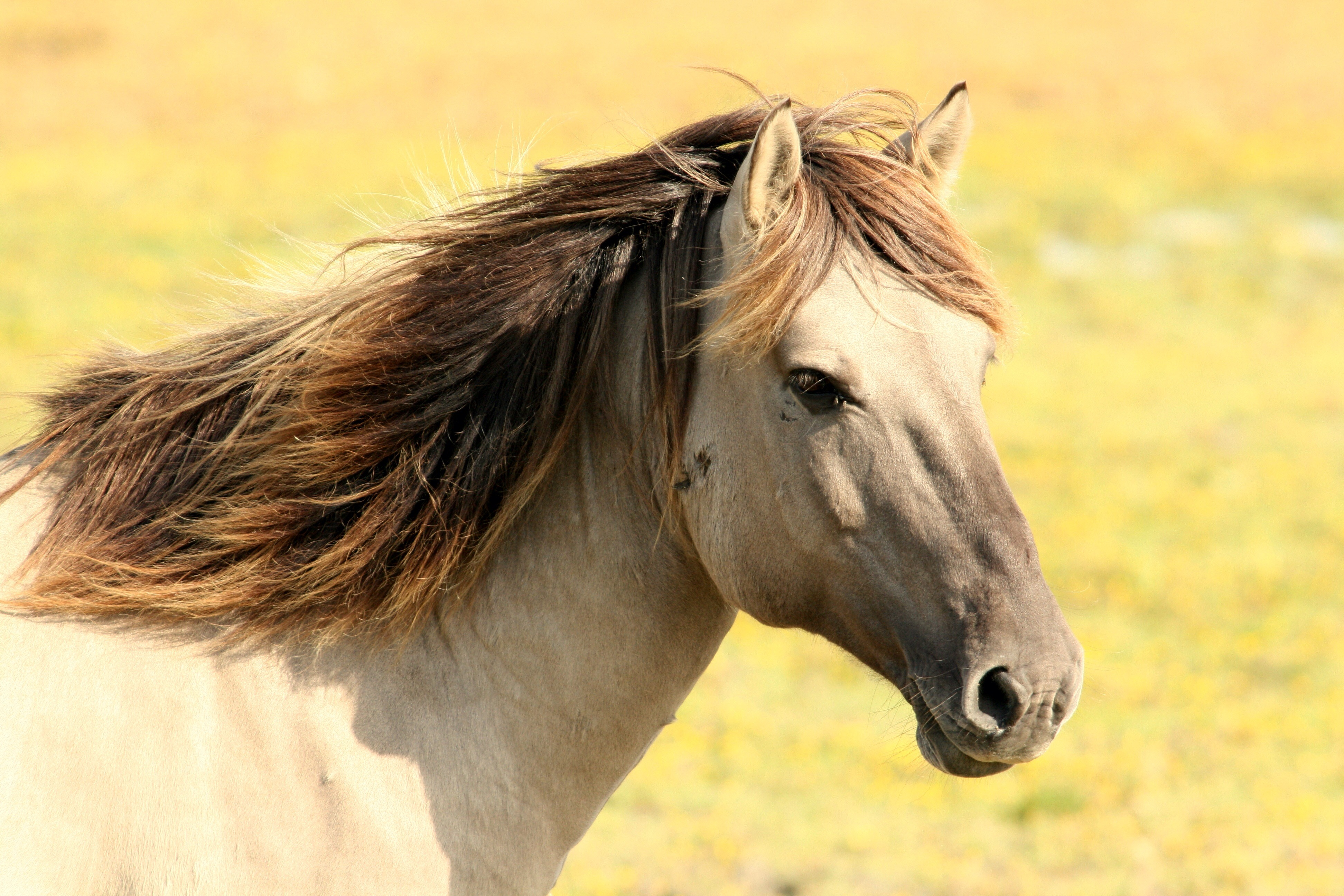 HD Quality Wallpaper | Collection: Animal, 3888x2592 Horse