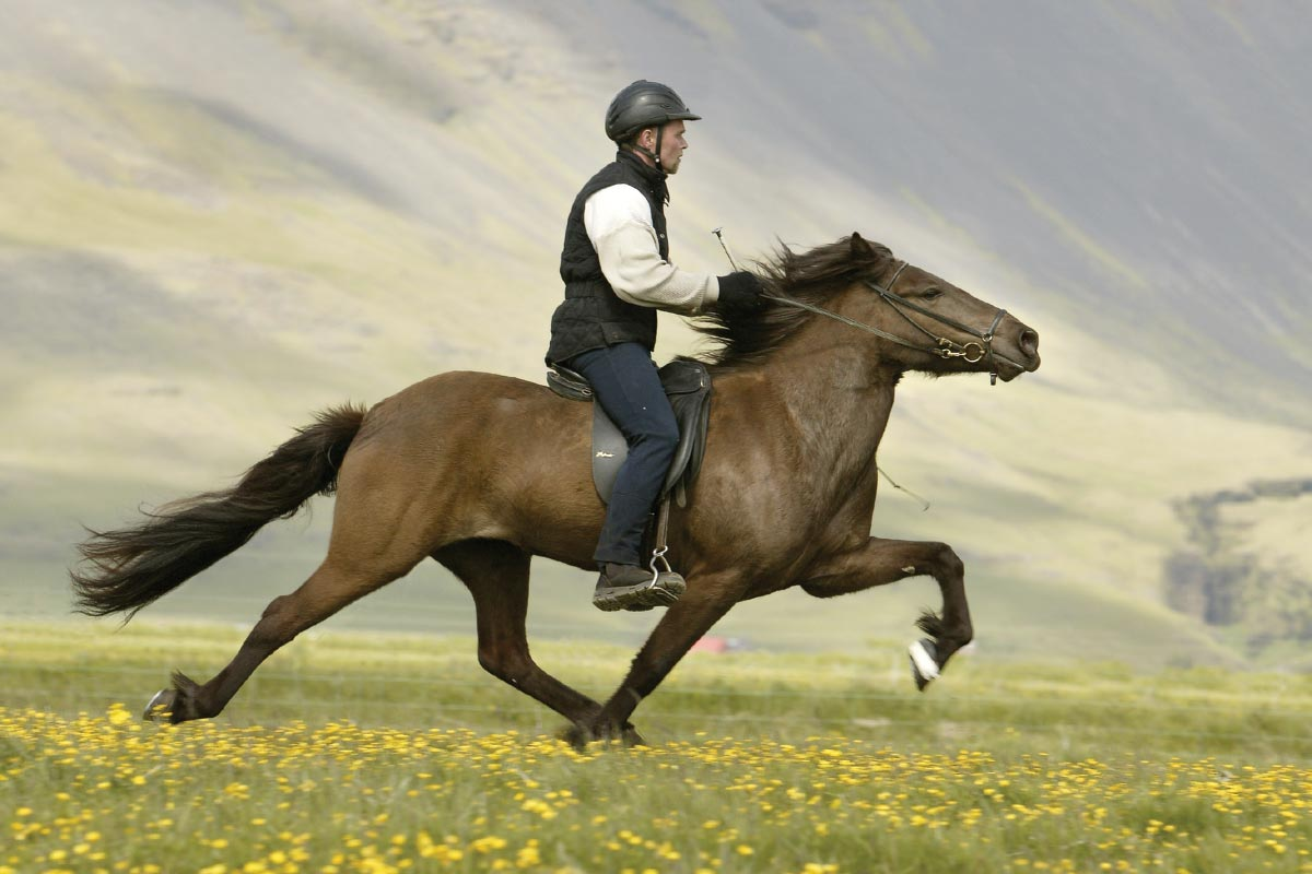 HQ Horse Riding Wallpapers | File 96.54Kb