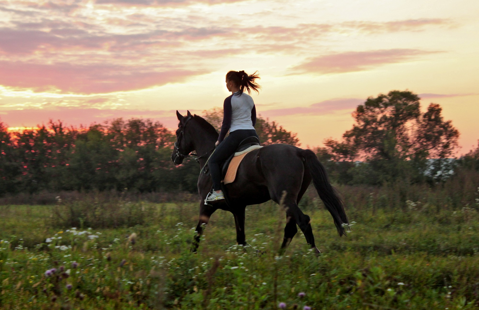 Horse Riding Pics, Photography Collection