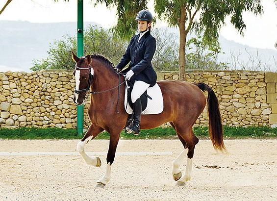 565x410 > Horse Riding Wallpapers