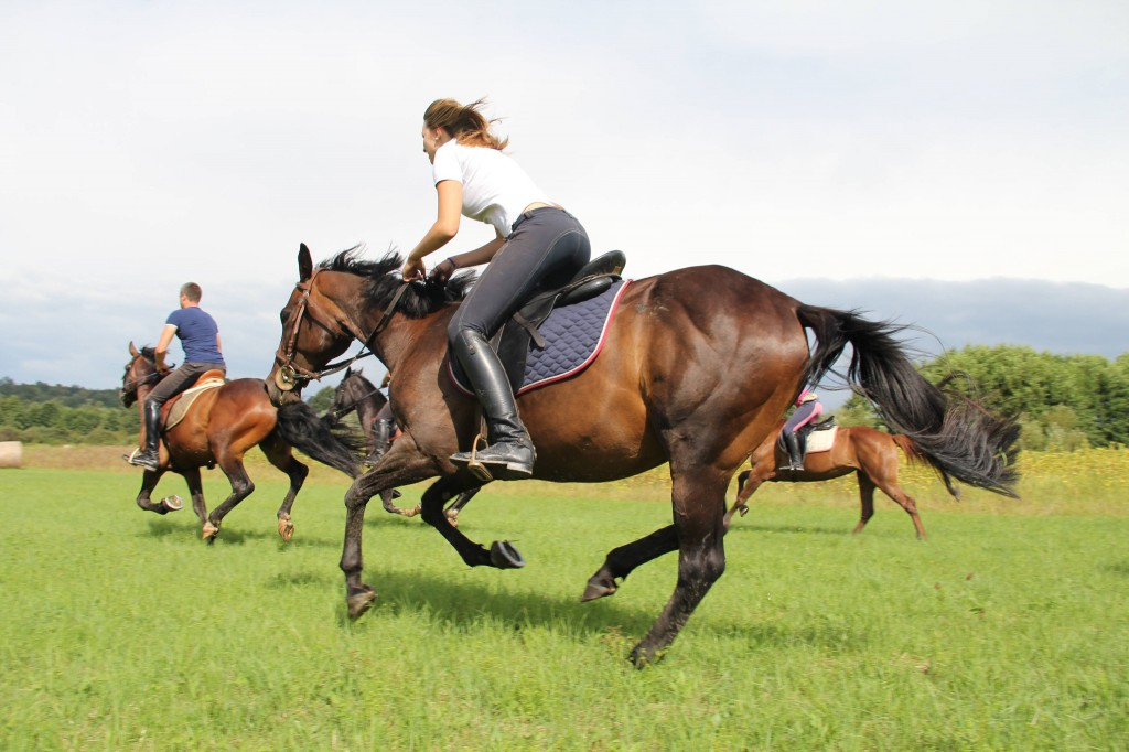 1024x682 > Horse Riding Wallpapers