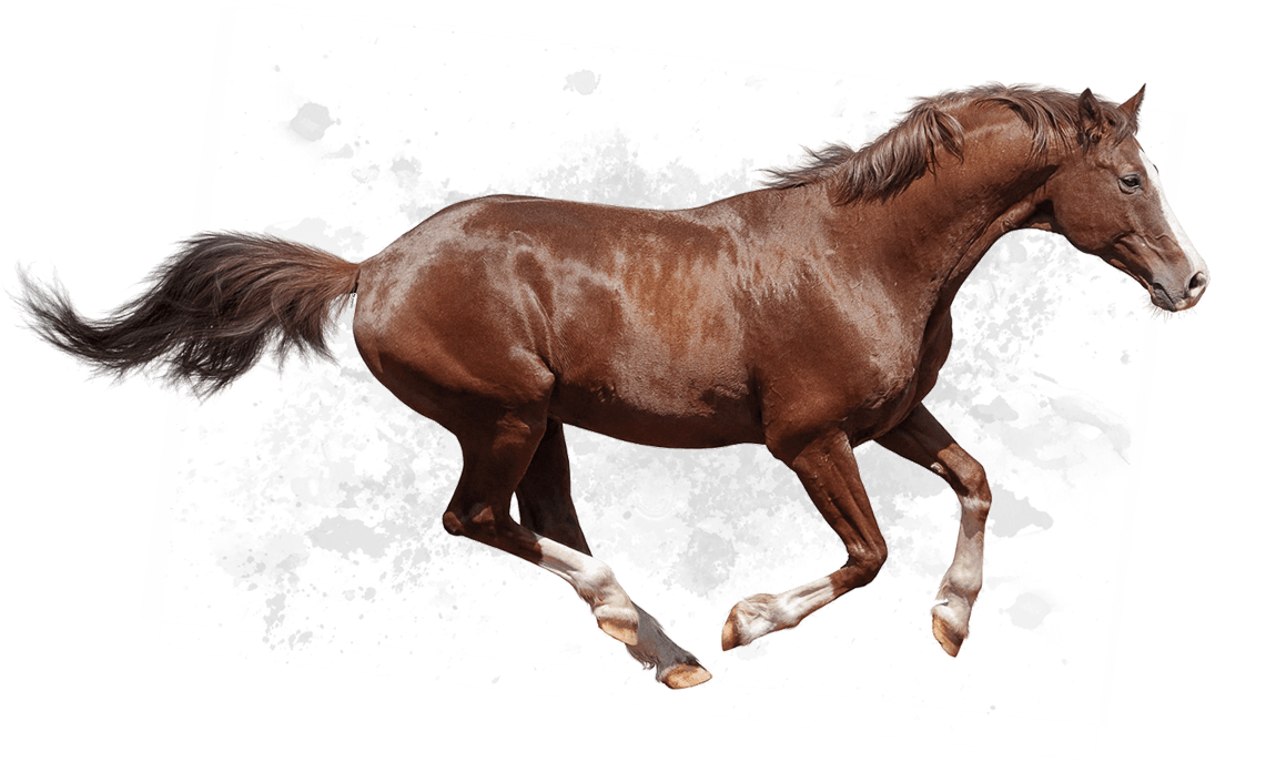 HD Quality Wallpaper | Collection: Animal, 1150x687 Horse
