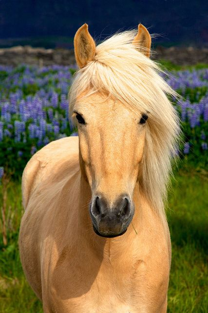 HQ Horse Wallpapers | File 53.41Kb