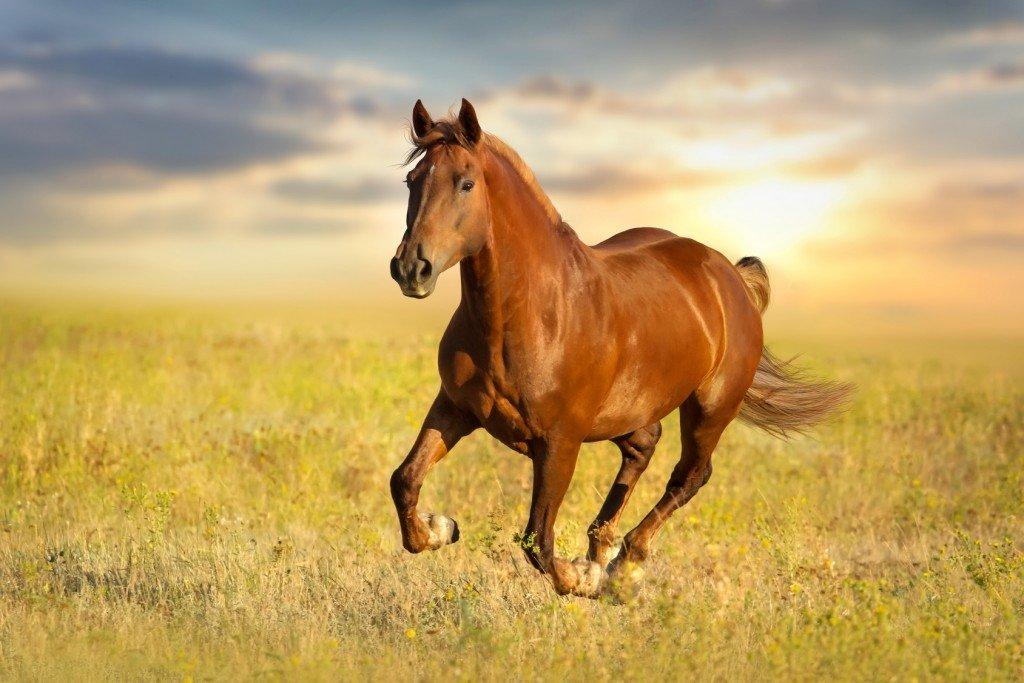 High Resolution Wallpaper | Horse 1024x683 px