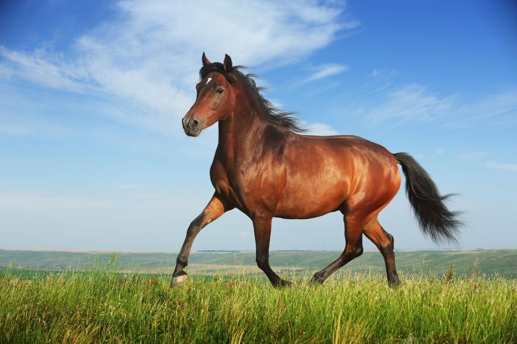 Horse Pics, Animal Collection