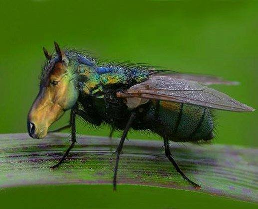 Horse-fly Pics, Animal Collection