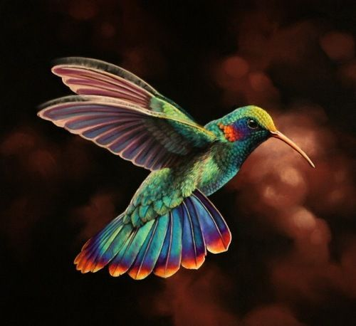 HD Quality Wallpaper | Collection: Animal, 500x458 Hummingbird