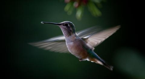 Hummingbird Backgrounds on Wallpapers Vista