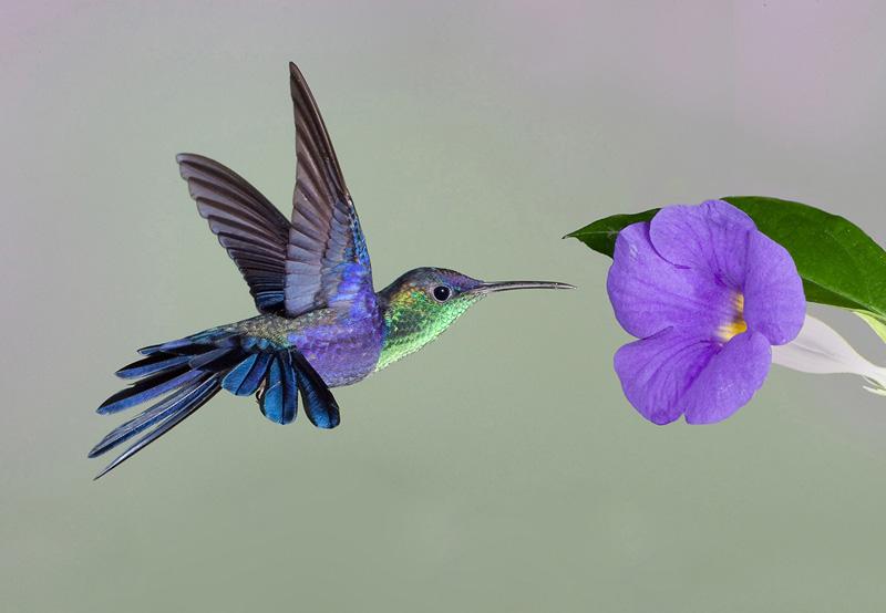 Hummingbird High Quality Background on Wallpapers Vista