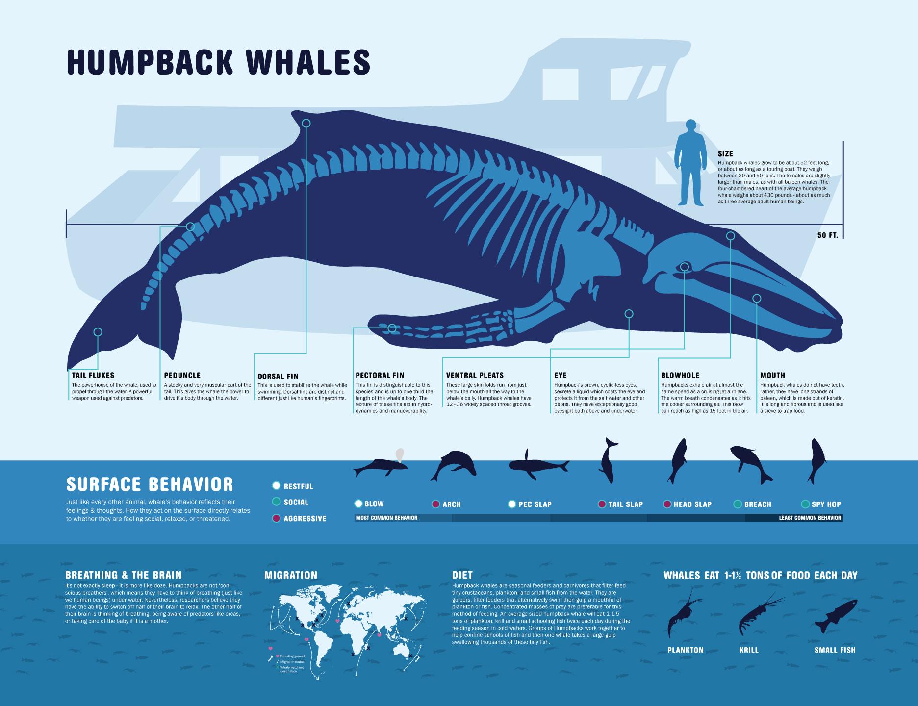 Humpback Whale Backgrounds, Compatible - PC, Mobile, Gadgets| 1872x1440 px