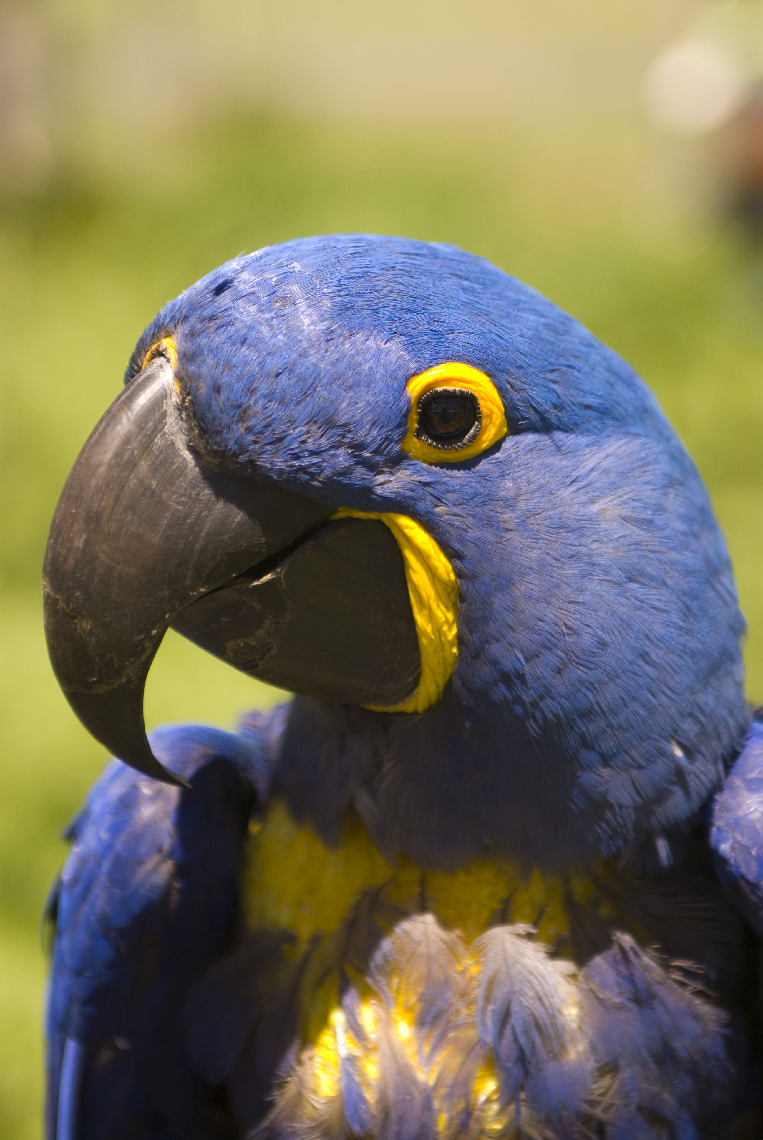 2592x3872 > Hyacinth Macaw Wallpapers