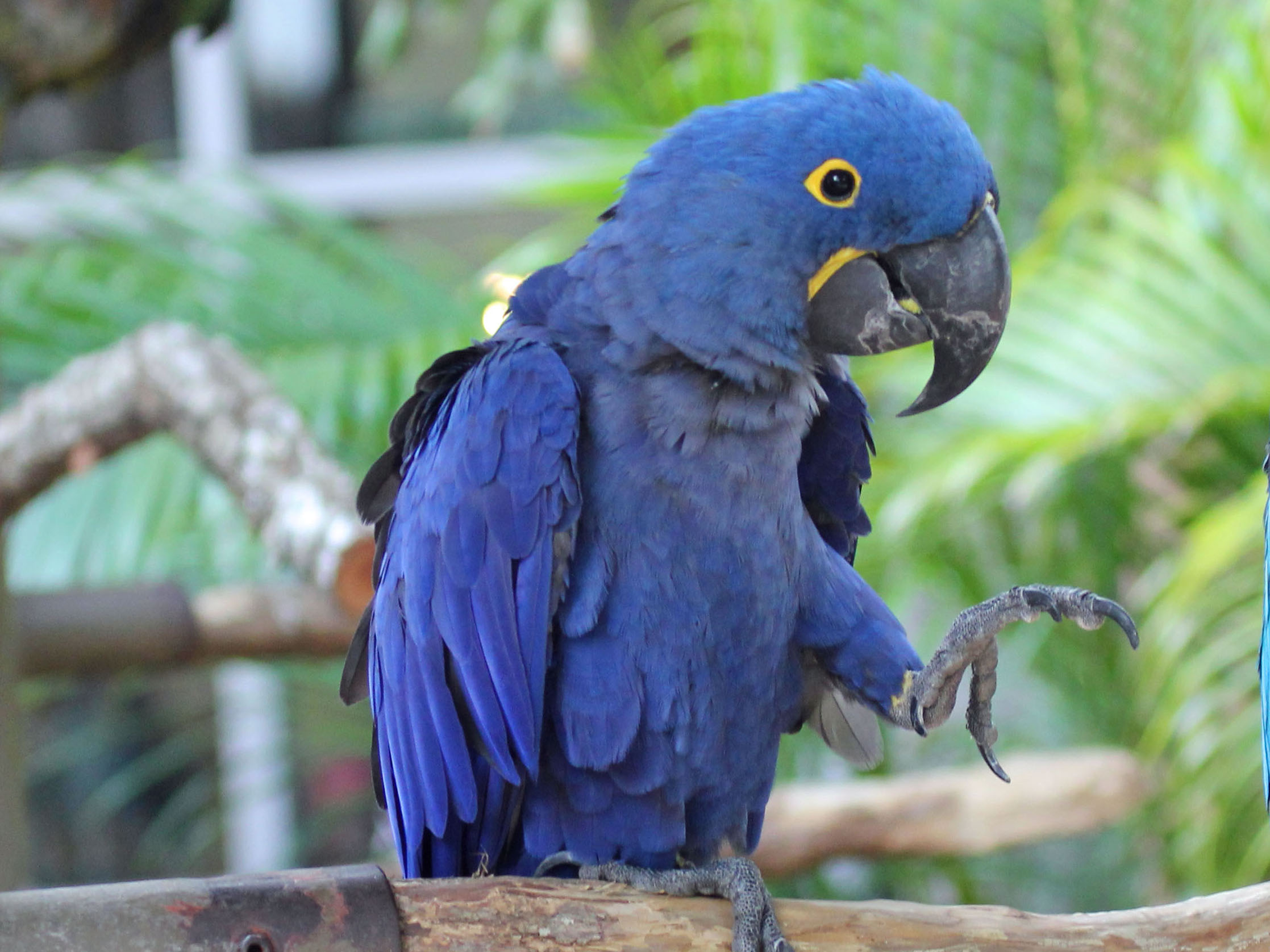 2235x1676 > Hyacinth Macaw Wallpapers