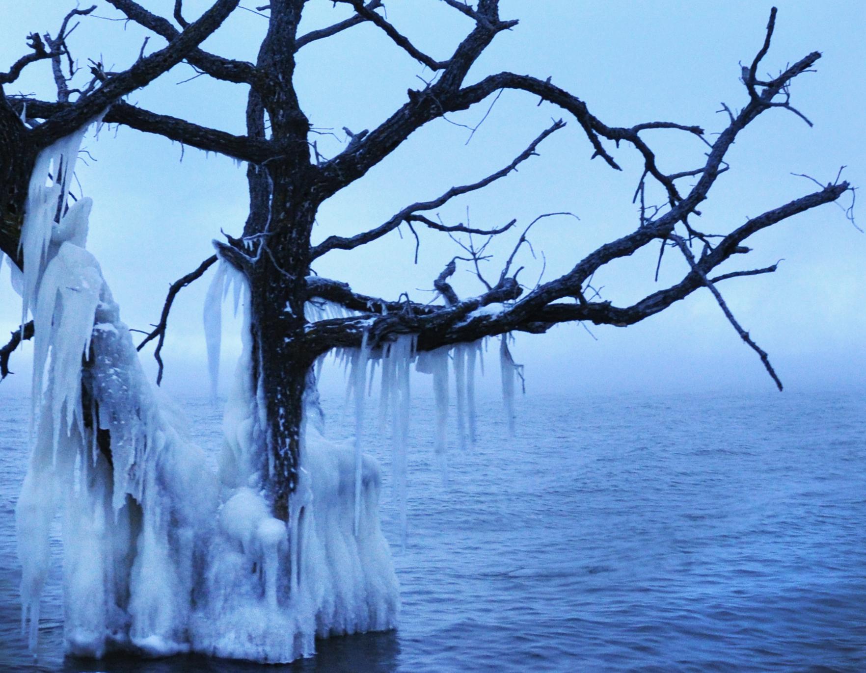 Ice Tree #6