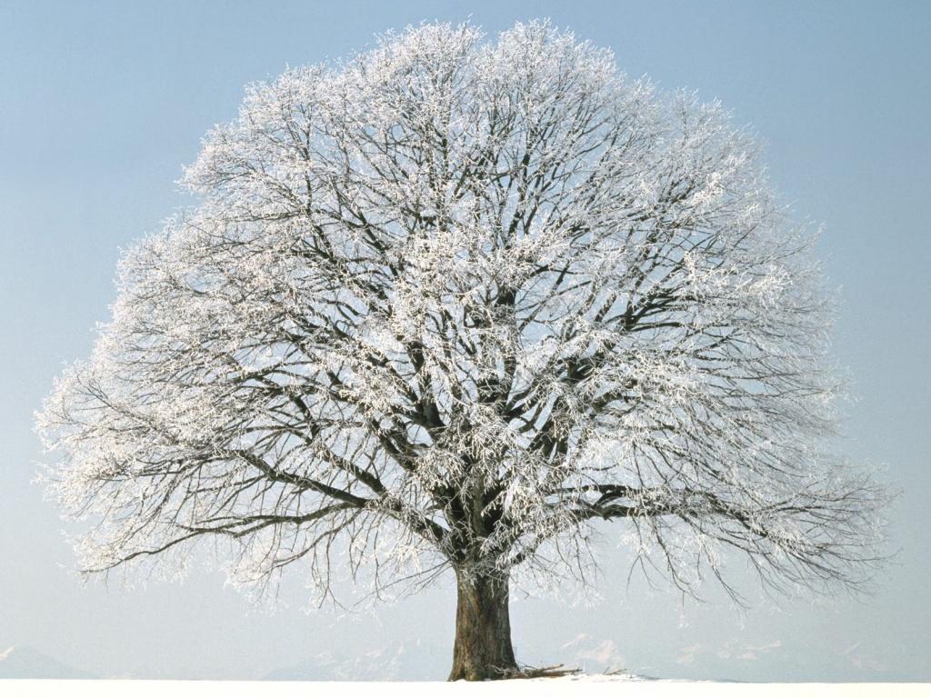 Ice Tree #4