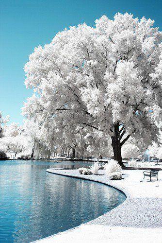 Ice Tree HD wallpapers, Desktop wallpaper - most viewed
