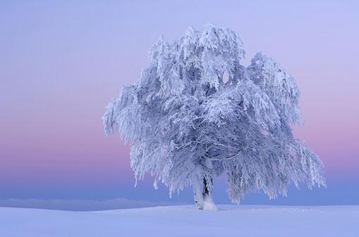 Ice Tree #15