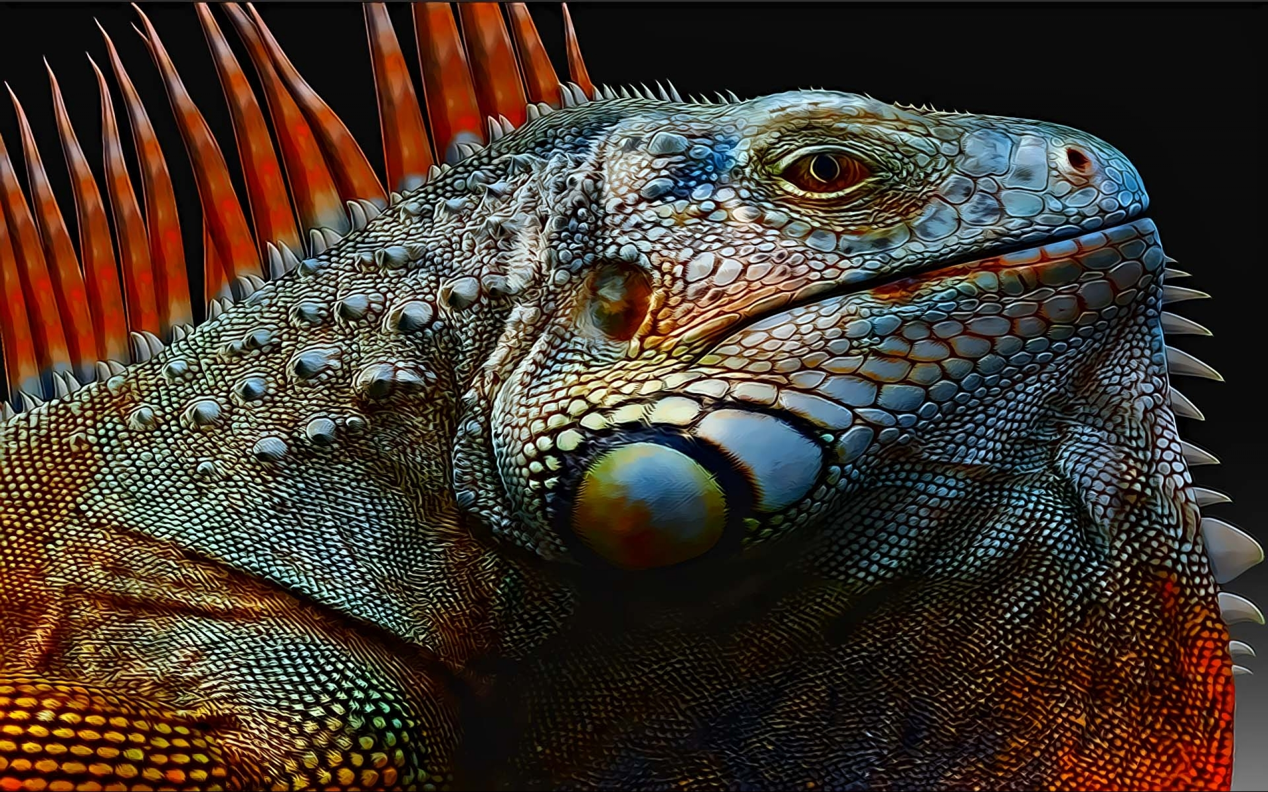 Nice Images Collection: Iguana Desktop Wallpapers