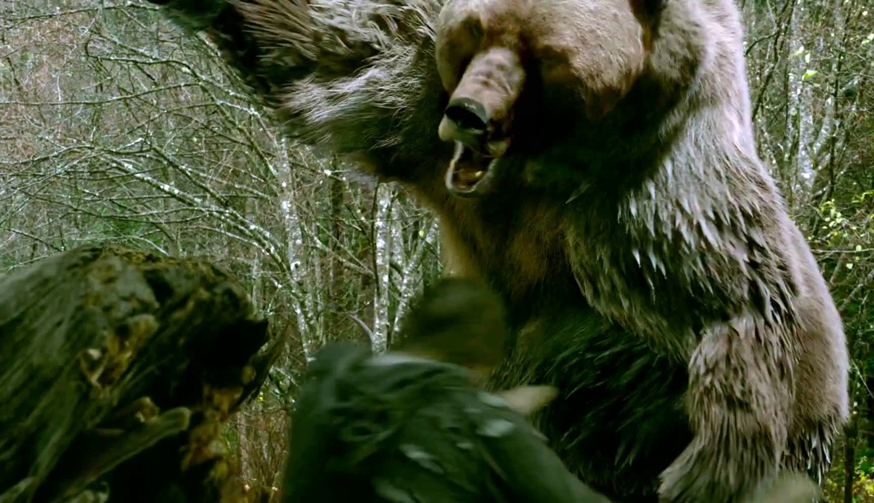 HD Quality Wallpaper | Collection: Movie, 1722x991 Into The Grizzly Maze