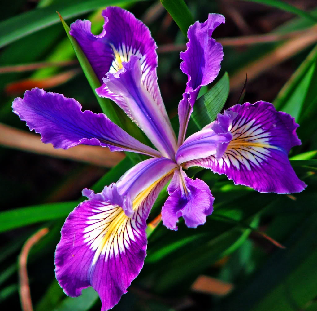 Iris Backgrounds, Compatible - PC, Mobile, Gadgets| 1024x1003 px