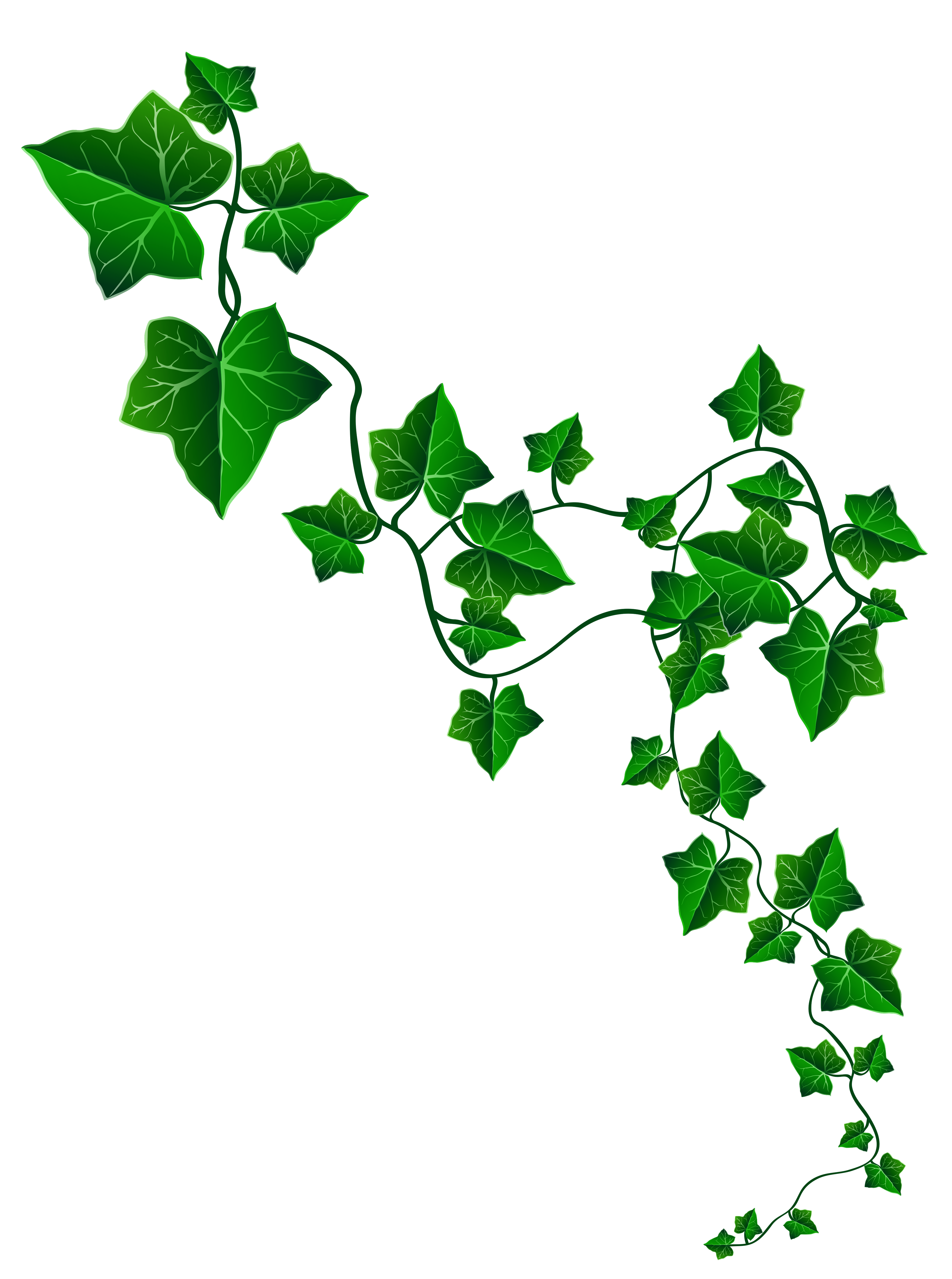Ivy Backgrounds on Wallpapers Vista