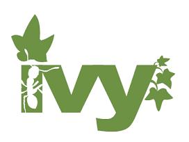 Ivy #11