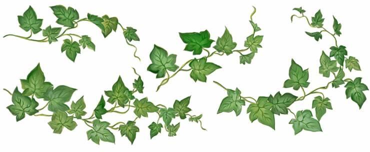 Ivy #15