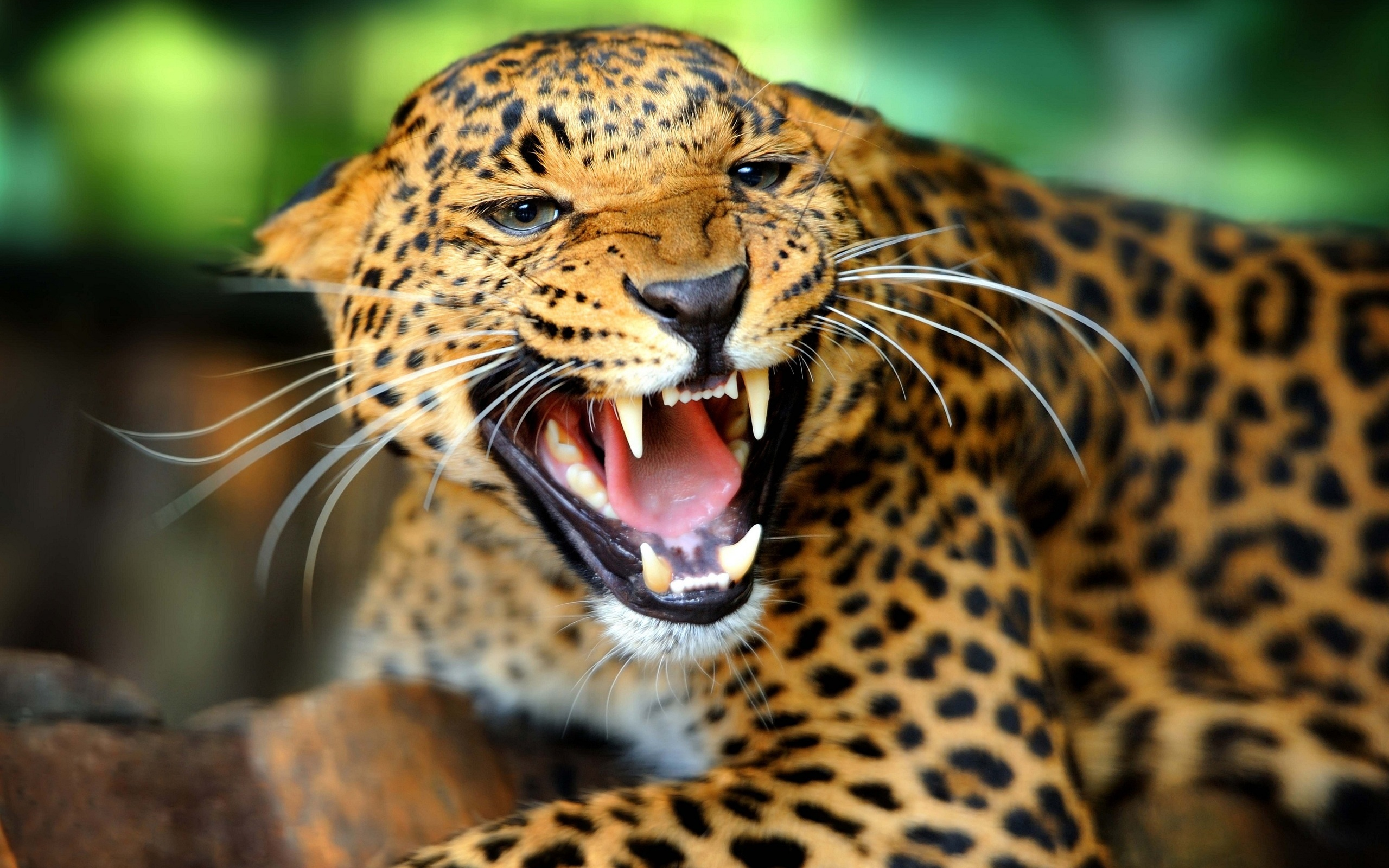 Nice wallpapers Jaguar 2560x1600px