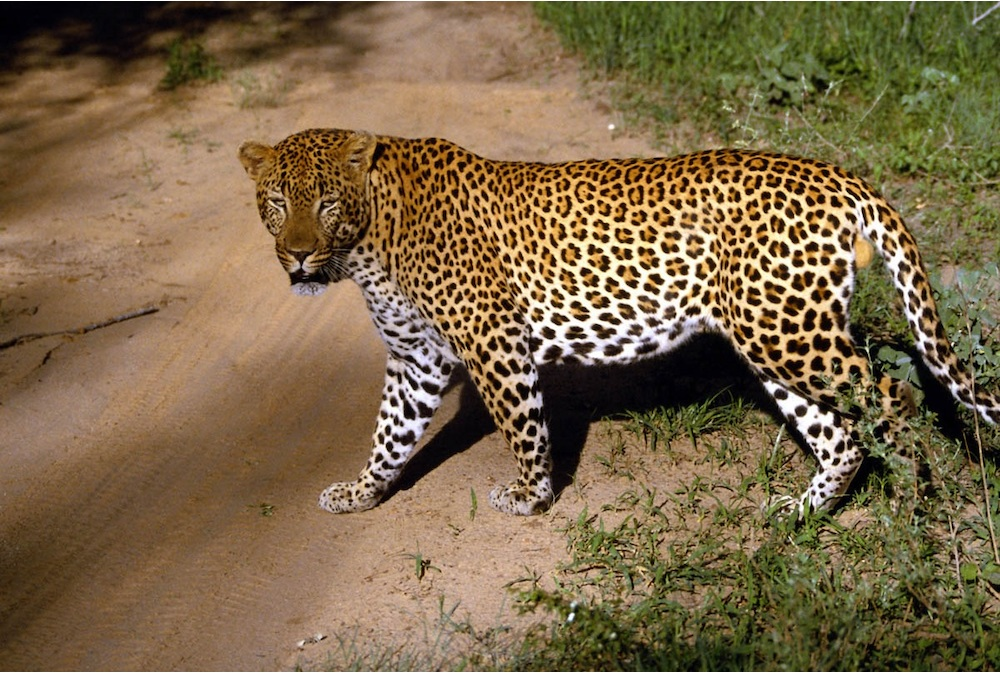 Images of Jaguar | 1000x673