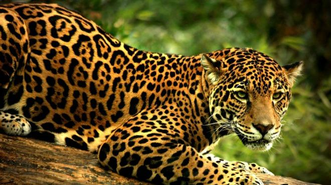 Nice wallpapers Jaguar 660x370px