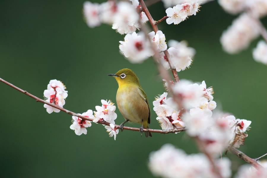 Japanese White-eye Pics, Animal Collection