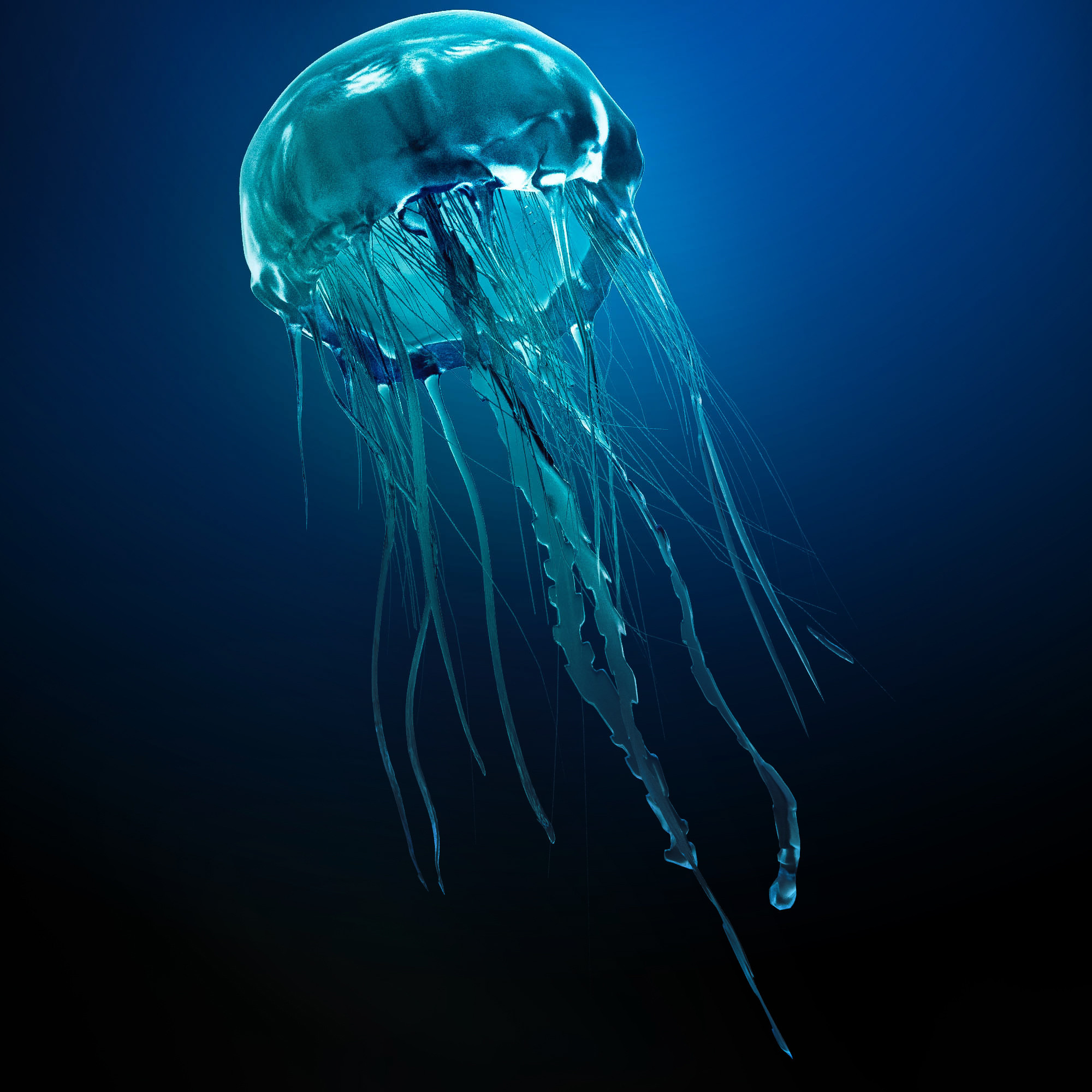 Jellyfish Backgrounds on Wallpapers Vista