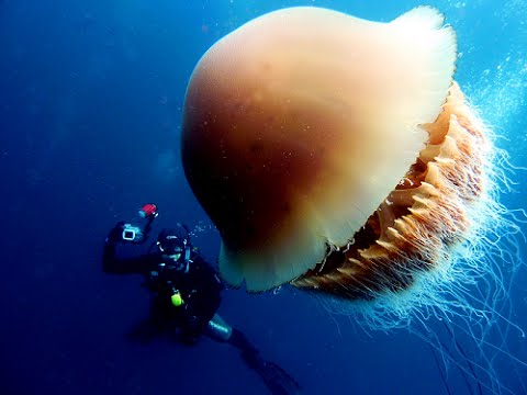 Jellyfish Backgrounds, Compatible - PC, Mobile, Gadgets| 480x360 px