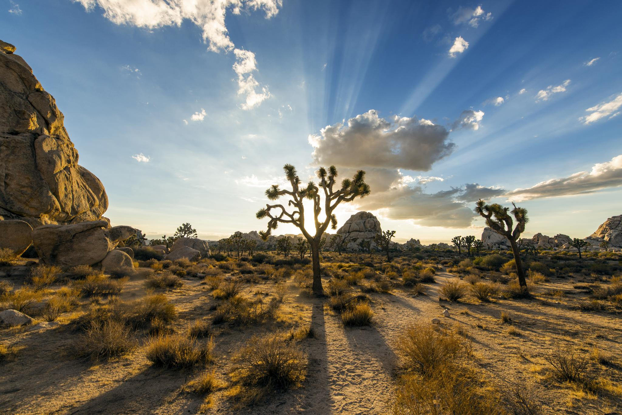 Joshua Tree National Park High Quality Background on Wallpapers Vista