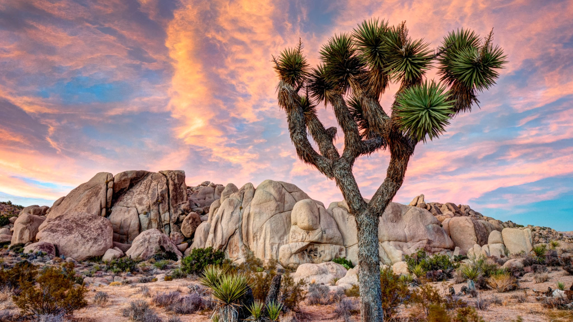 High Resolution Wallpaper | Joshua Tree National Park 1920x1080 px