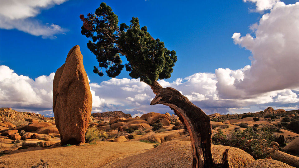Joshua Tree National Park Backgrounds, Compatible - PC, Mobile, Gadgets| 960x540 px