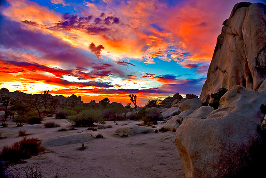 Nice Images Collection: Joshua Tree National Park Desktop Wallpapers